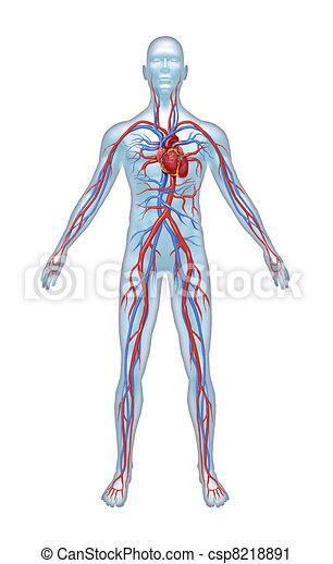 Human Cardiovascular System - csp8218891