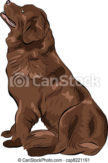 vector color sketch dog Newfoundland hound breed sitting - csp8221161