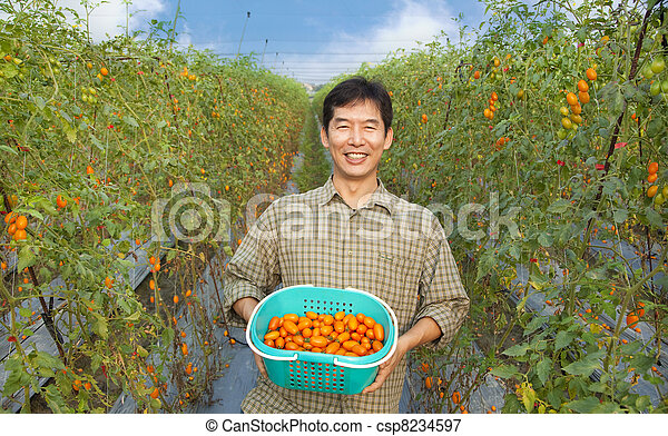 middle aged happy  asian farmer holding tomato on his farm - csp8234597