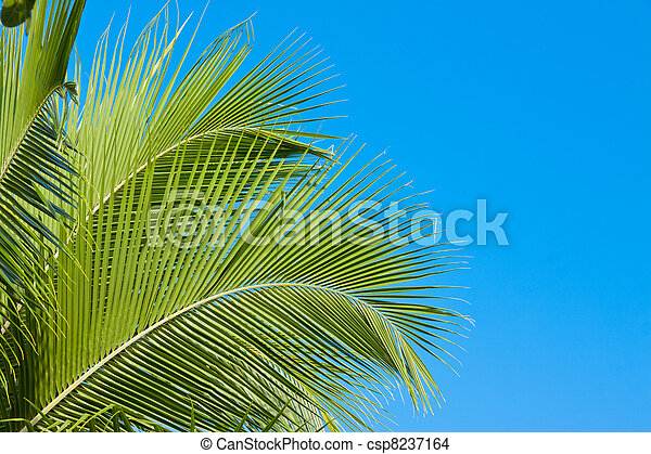 Palm tree fronds - csp8237164