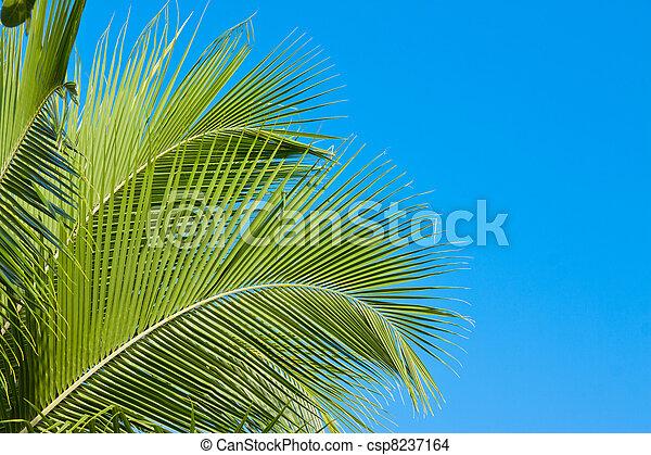 Palm tree fronds - csp8237164