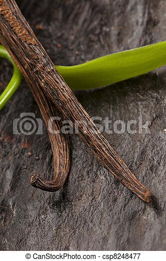 Vanilla Planifolia Vine and Dried Vanilla Pods  - csp8248477