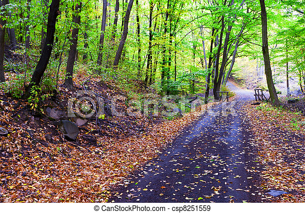 Autumn forest, winding road, bridge it. - csp8251559