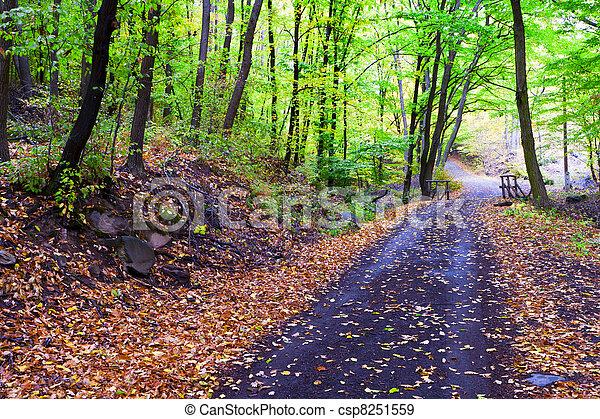 Autumn forest, winding road, bridge it. - csp8251559