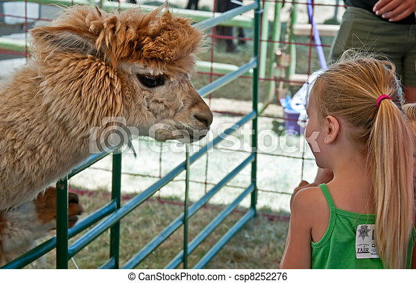 ALBANY, OR - JULY 16 - Linn County Fair Child and Alpaca - csp8252276