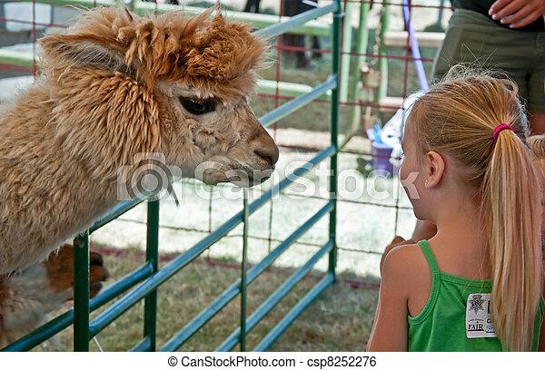 ALBANY, OR - JULY 16 - Linn County Fair Child and Alpaca - csp8252276