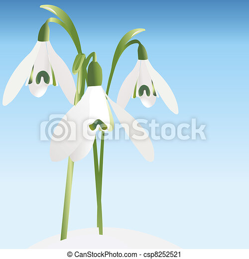 Spring background with snowdrop - csp8252521