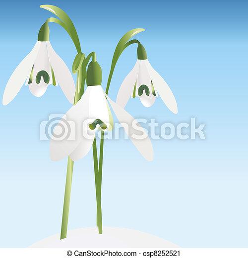 Spring background with snowdrop - csp8252521