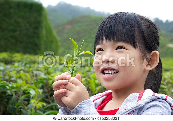 Little child at tea plantation - csp8253031