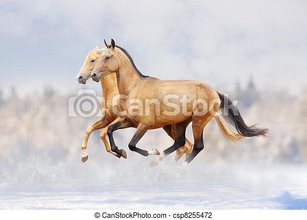 purebred horses - csp8255472