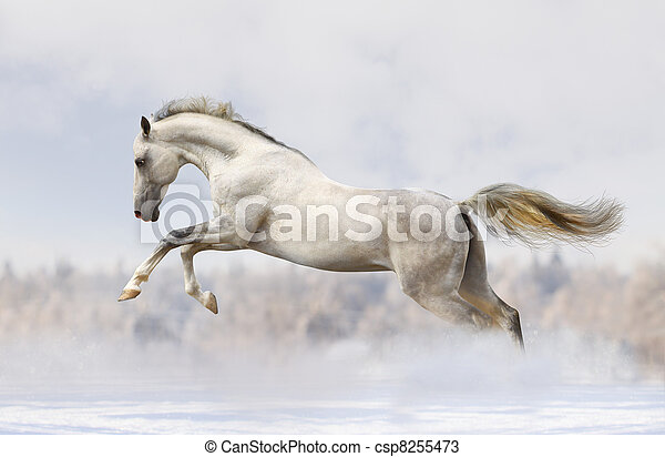 silver-white stallion - csp8255473