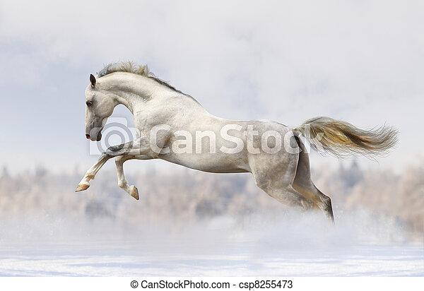 silver-white stallion - csp8255473
