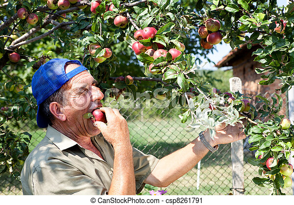 Apple orchard and old farmer - csp8261791