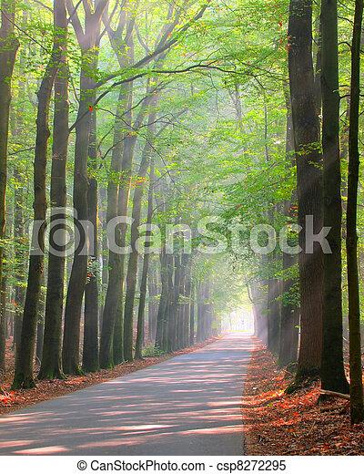 Brightly lit forest lane - csp8272295