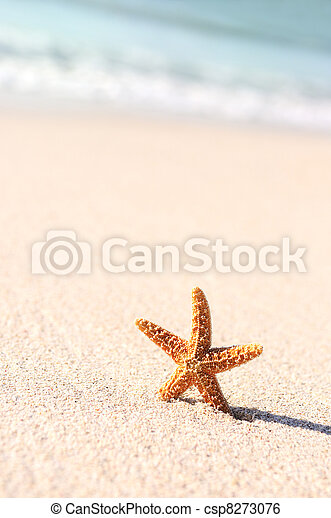 starfish in vacations - csp8273076