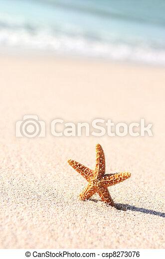 starfish in vacations - csp8273076