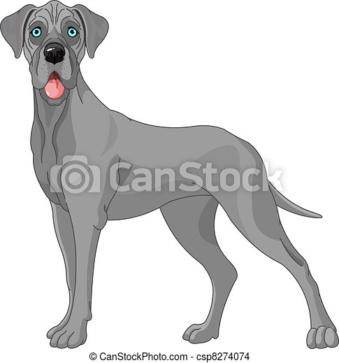 Great Dane dog  - csp8274074