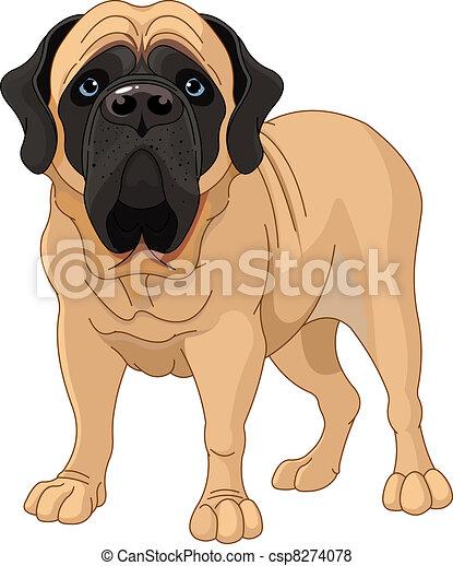 English Mastiff  - csp8274078
