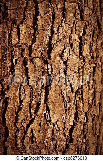 tree bark - csp8276610