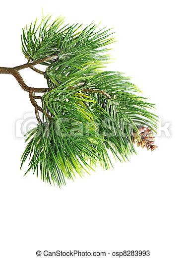 photos de sapin fin arbre haut branche fin haut de sapin csp8283993 recherchez. Black Bedroom Furniture Sets. Home Design Ideas