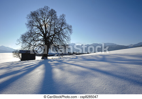 single oak tree in winter at alps mountains in bavaria, germany - csp8285047