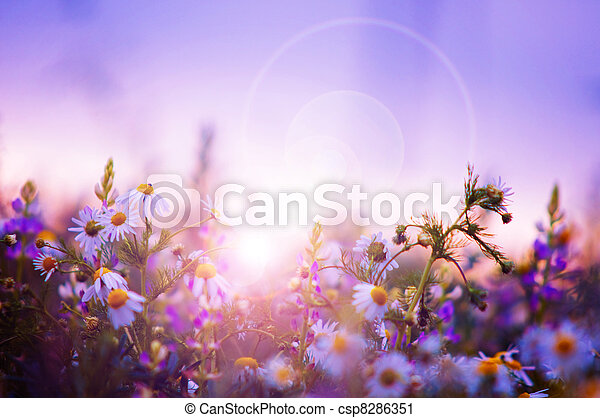Spring flowers field - csp8286351
