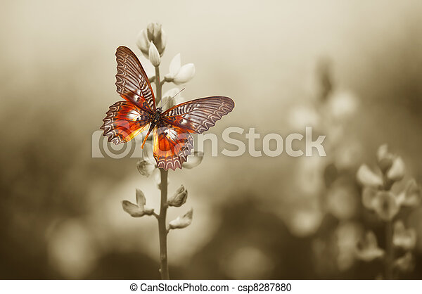 A red butterfly on the moody field - csp8287880