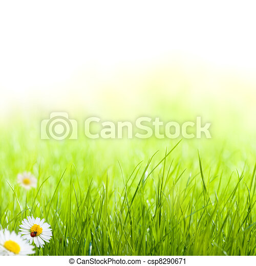 green grass with daisy and ladybug on the left side of the picture. there is blur at the background - csp8290671