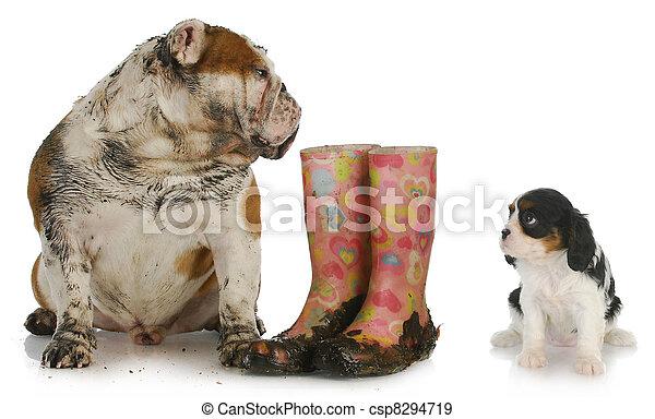 dirty dog looking at clean dog - csp8294719