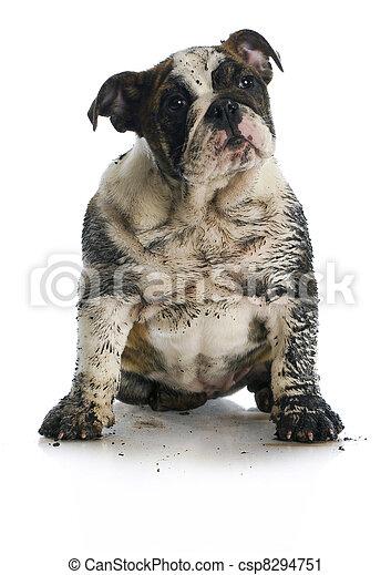 dirty dog - csp8294751