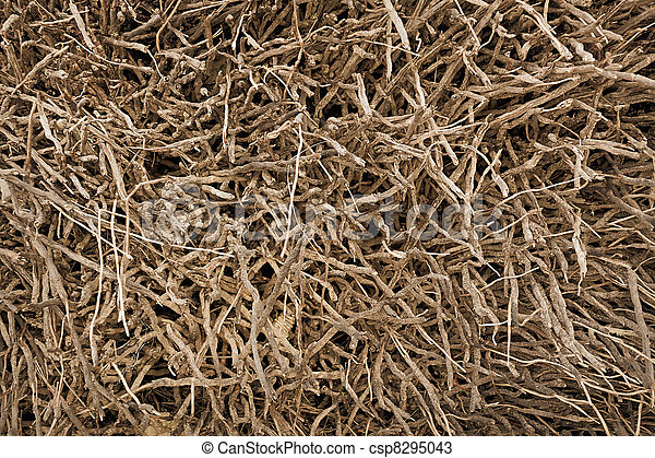 Roots of plants - natural background