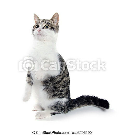 Cat begging - csp8296190
