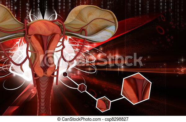 Uterus  - csp8298827