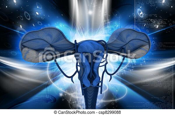 Uterus  - csp8299088