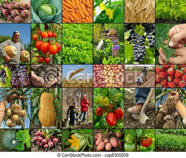 farming collage - csp8300209