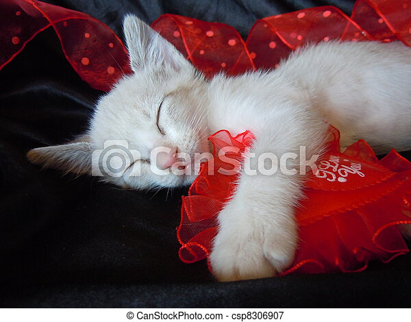 sleeping kitten and red heart - csp8306907