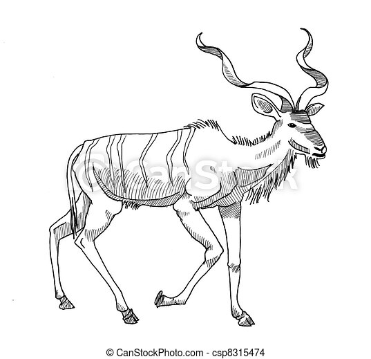 Antelope Line Drawing Ink Drawing of a Greater Kudu