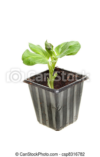 Photo de petit large haricot plante petit plant for Petite plante plastique