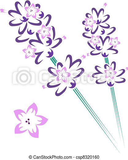Lavender stem & flowers - csp8320160
