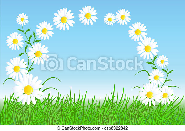 Camomiles with green grass - csp8322842