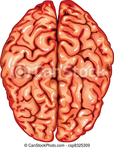 Human brain top view - csp8325309