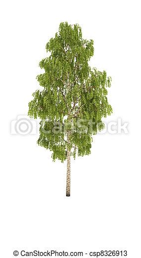 tree birch shadow cg - csp8326913