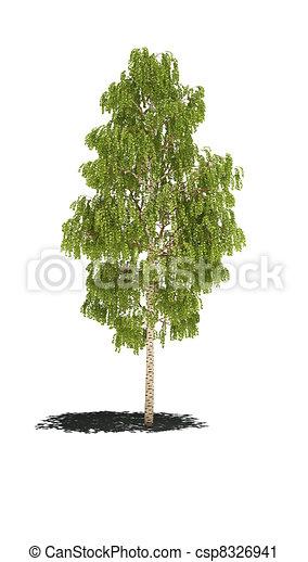 tree birch shadow cg - csp8326941