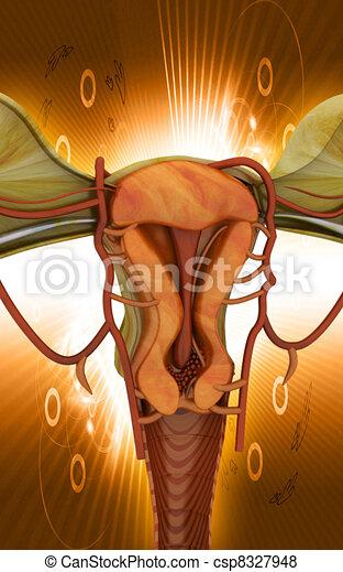 Uterus  - csp8327948