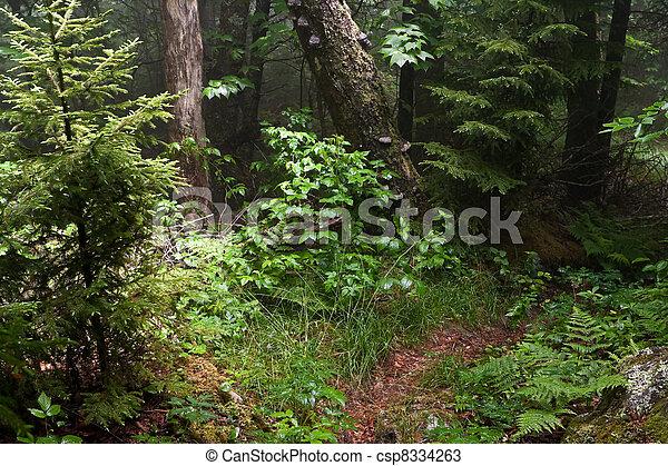 Appalachian Trail - csp8334263