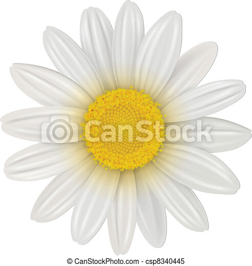 Daisy flower - csp8340445
