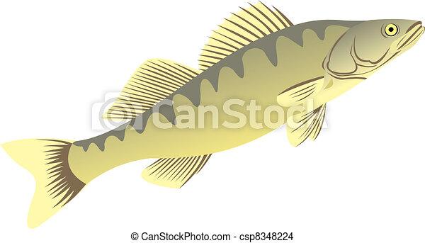 The big pike perch - csp8348224
