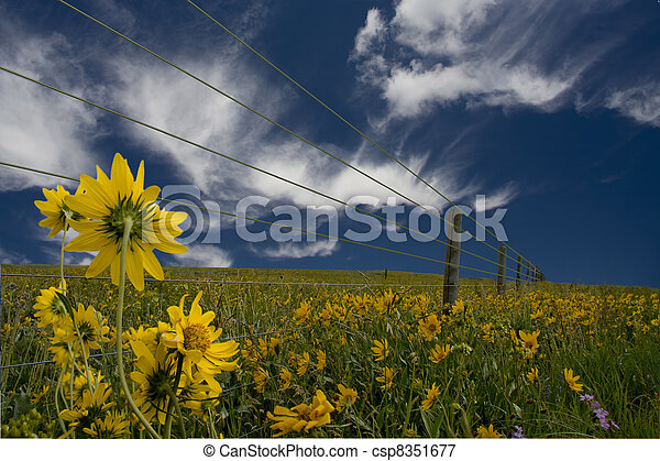 Yellow flowers and fence - csp8351677
