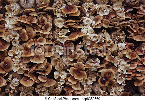 Many species of mushrooms. - csp8352860