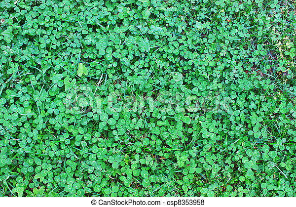 Clover also known as the Shamrock, the traditional Irish symbol coined by Saint Patrick for the Holy Trinity, an irish good luck charm and sacred plant - csp8353958